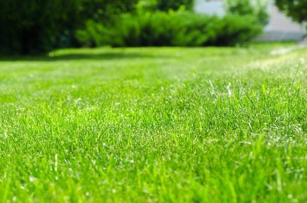 Kiedy siać trawę