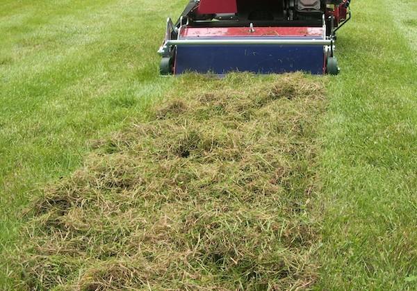 trawnik wertykulacja