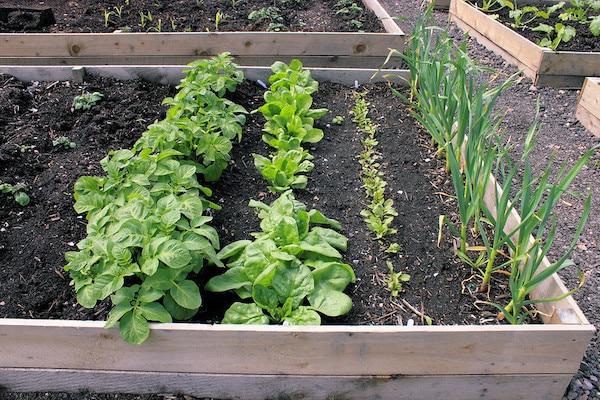 warzywa obok siebie