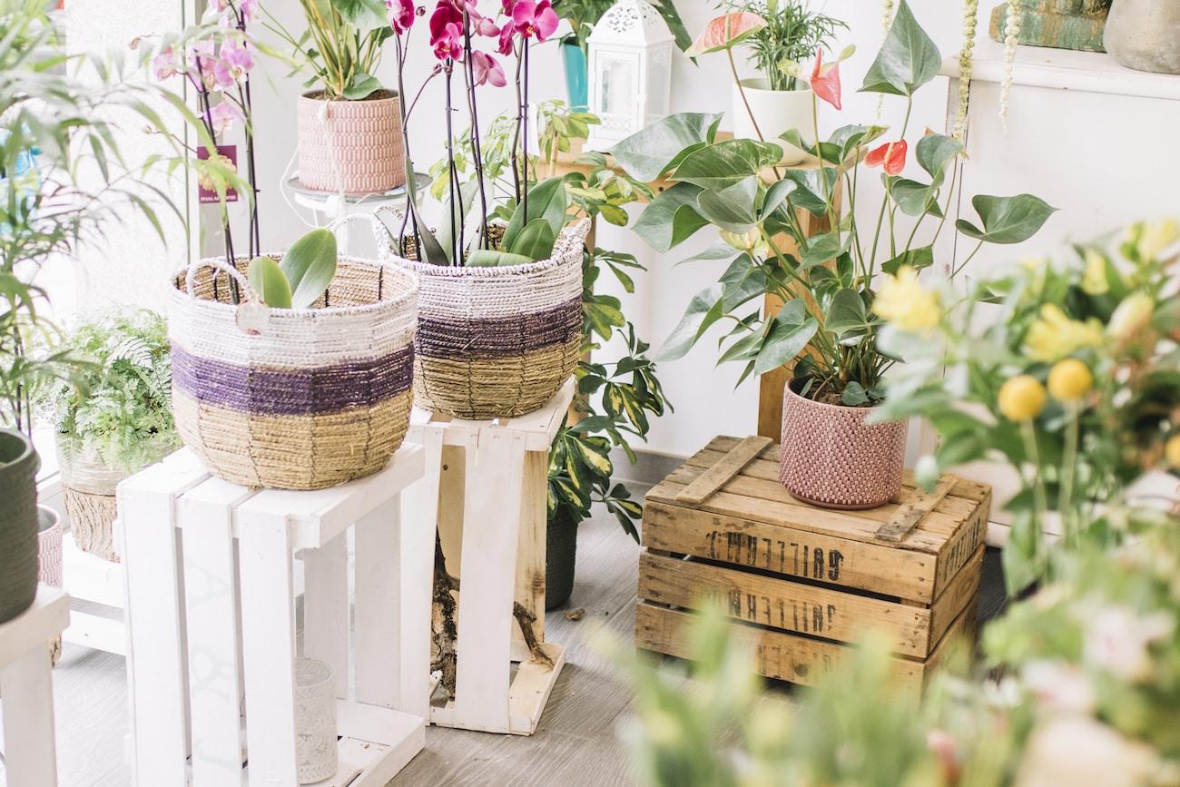 Jak Nawozic Kwiaty Doniczkowe Nawozenie Roslin Domowych Ogarnij Ogrod