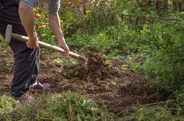 gleba ogród właściwości