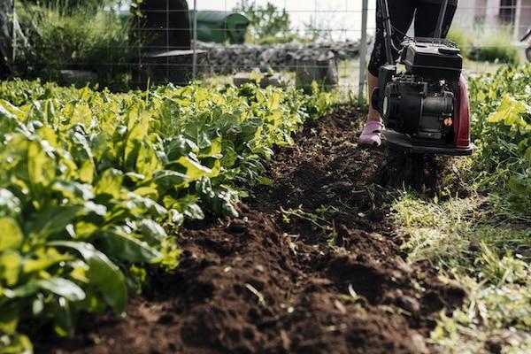 płodozmian żyzność gleby