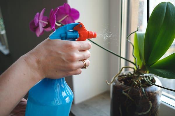 spryskiwanie roślin