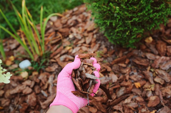 kora zakwaszanie gleby w ogrodzie