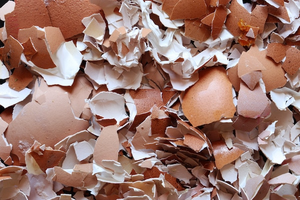 skorupki jaj pokruszone odkwaszanie gleby