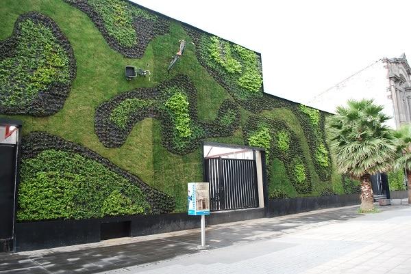 Zielona ściana, Universidad del Claustro de Sor Juana