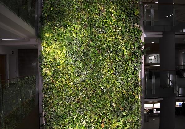 Zielony ogród, University of Ottawa