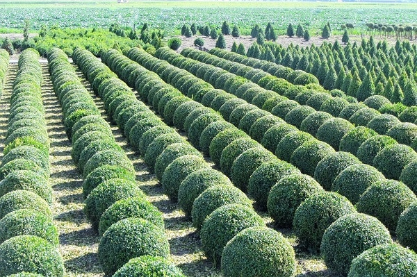 Kuliste krzewy