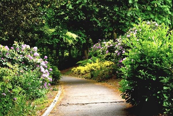 Ścieżka w parku w stylu angielskim
