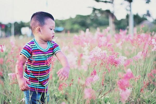 Chłopiec pośród kwiatów