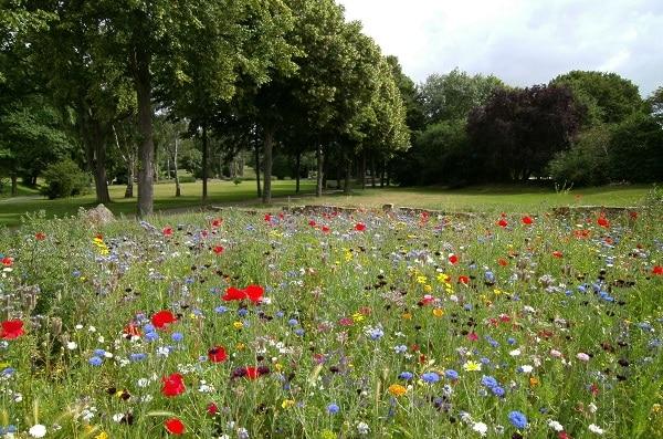 Zrównoważony ogród – Łąka kwietna