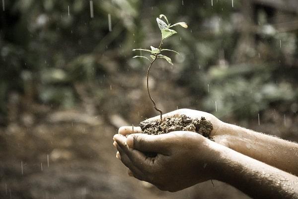 Sadzonka z glebą na dłoniach