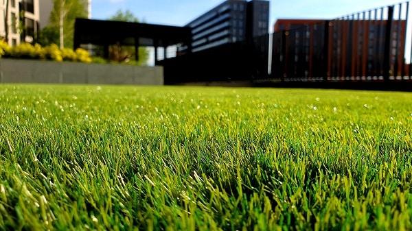 Zdrowy trawnik