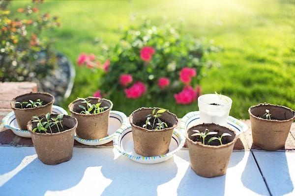 sadzenie kwiatów na rabacie