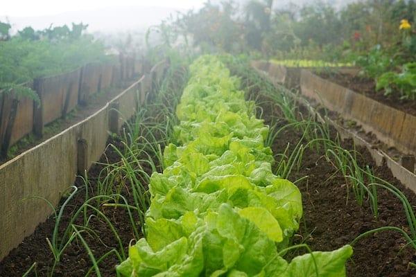 warzywnik odpowiednie ph gleby