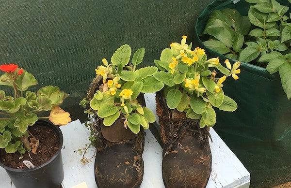 hortiterapia w ogrodzie