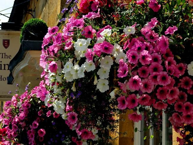 Kwiaty na balkon i taras TOP10 - Surfinie