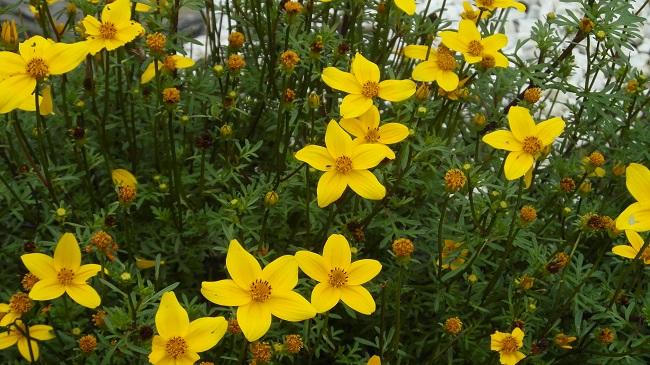 Kwiaty na balkon i taras TOP10 - Uczep