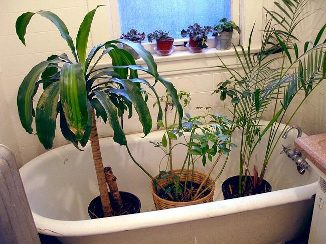 Rośliny w wannie