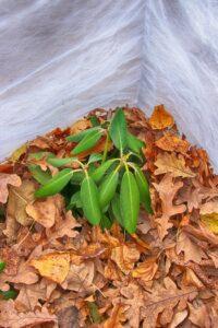 Ochrona roślin przed zimą