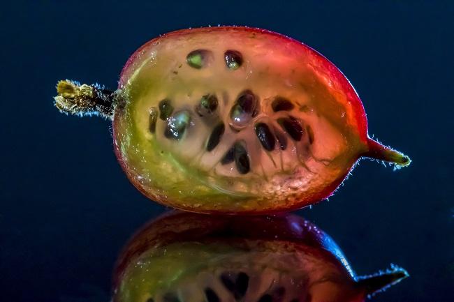Owoc agrestu