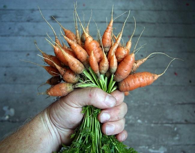 Dlaczego warzywa nie rosną