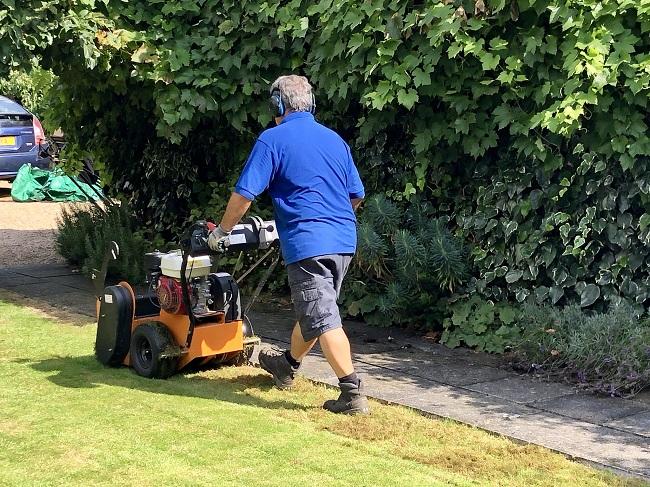 Grzyby na trawniku – wertykulacja trawnika
