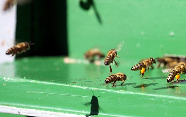 Jak zapobiegać zatruciu pszczół