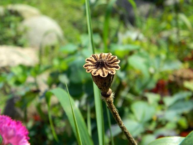 Nasiona kwiatów