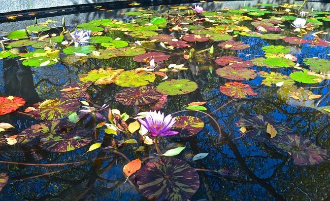 Październik w ogrodzie - oczko wodne