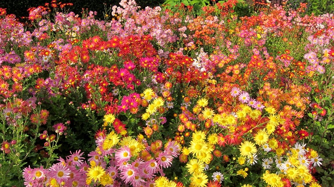 Październik w ogrodzie - ogród ozdobny