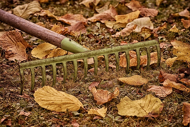 Październik w ogrodzie - trawnik