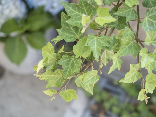 Rośliny na balkon i taras