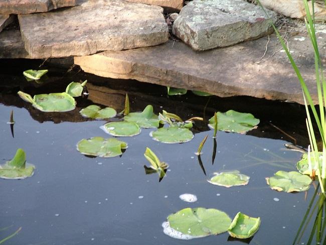 Wrzesień w ogrodzie - oczko wodne