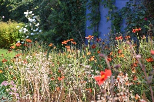 Wrzesień w ogrodzie - zbieranie nasion