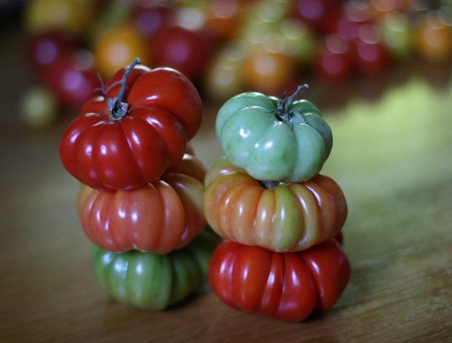 Pomidory włoskie - Costoluto