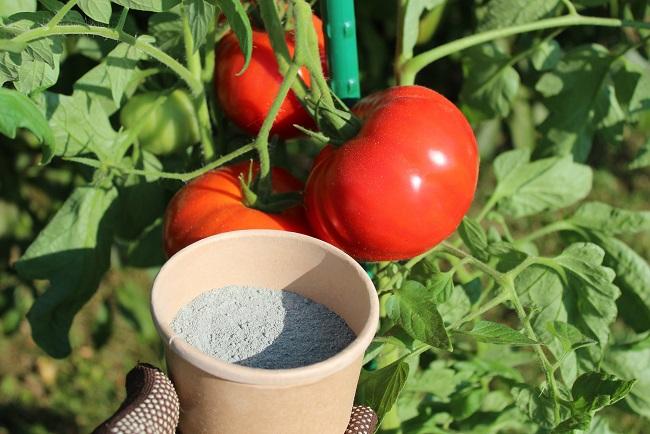 Uprawa pomidorów w gruncie – mączka bazaltowa