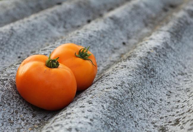Właściwości pomidorów - pomidor pomarańczowy